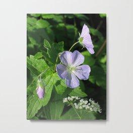 Wild Geranium Metal Print