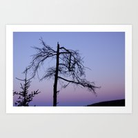 tree branch sunset Art Print