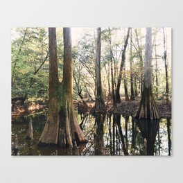 Old Growth Cypress Canvas Print