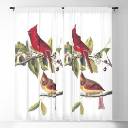 Cardinal grosbeak, Birds of America, Audubon Plate 159 Blackout Curtain