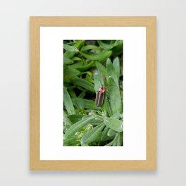 Lightning Bug on Leaf Framed Art Print