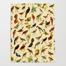 Vintage Birds of Brazil Designs Collection Poster