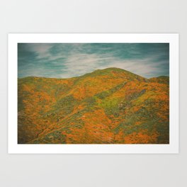 California Poppies 036 Art Print