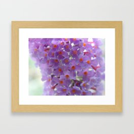 Purple Cluster Framed Art Print