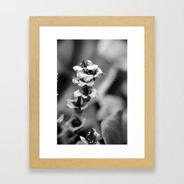 cordifolia Framed Art Print