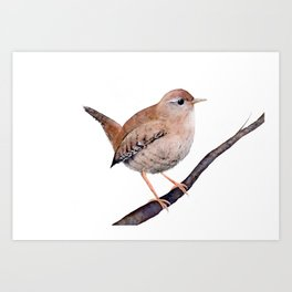 Wren, Bird, Brown Bird Watercolor Painting by Suisai Genki Art Print