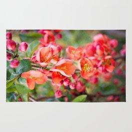Quince blossom Rug