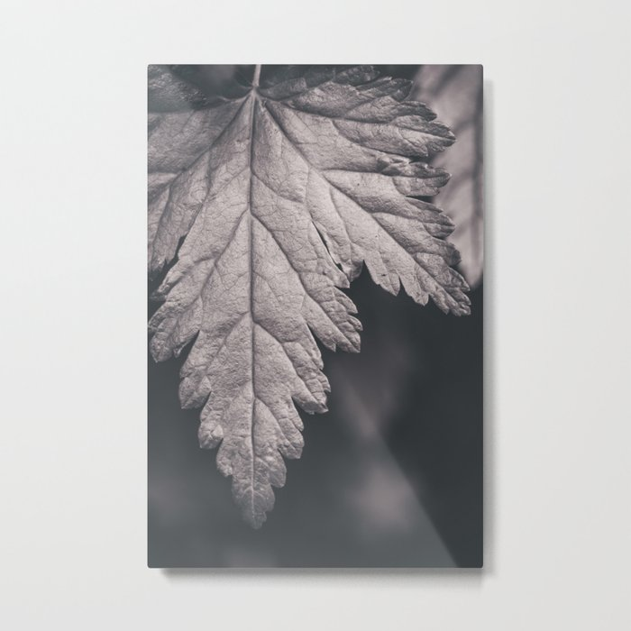 Black and White Forest Leaf Metal Print