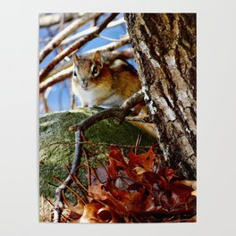 Chipmunk in the leaves Poster