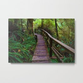 Walks through the Rainforest on Vancouver Island, Canada Metal Print