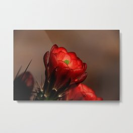 The Desert Rose... Metal Print
