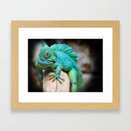 Gecko Reptile Photography Framed Art Print
