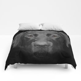 Olivia Comforters