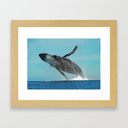 A WHALE OF A TIME Framed Art Print