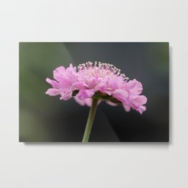 It just blooms Metal Print