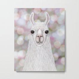 Llama farm animal portrait Metal Print