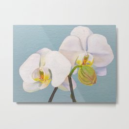 Phaelenopsis - moth orchid painting, on pale green Metal Print