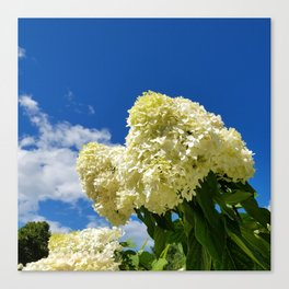 White clouds and white clouds of Hydrangea flowers Canvas Print