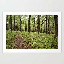 Forest Heritage Art Print