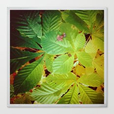Autumnal#5 Canvas Print
