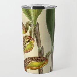 Cryptophoranthus dayanus (= Zootrophion dayanum), Orchidaceae Travel Mug