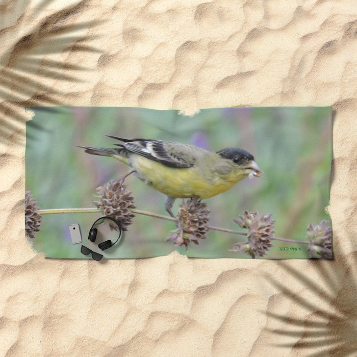 Lesser Goldfinch Snacks on Seeds Beach Towel