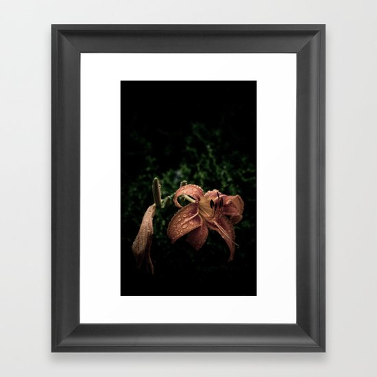 Wilted Lily  Framed Art Print