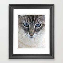 Blue Eyed Cat Framed Art Print