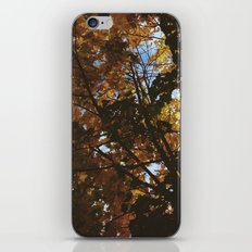 Autumn Shine iPhone & iPod Skin