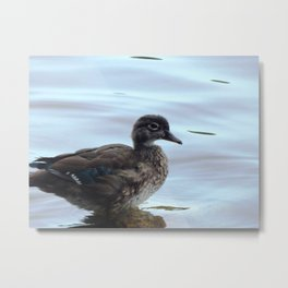 The youngest duck Metal Print