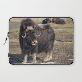 Arctic Muskox Laptop Sleeve