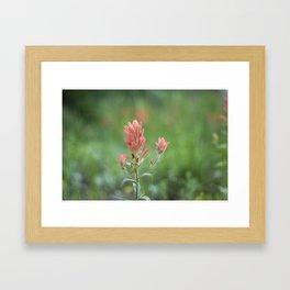 Castilleja Framed Art Print