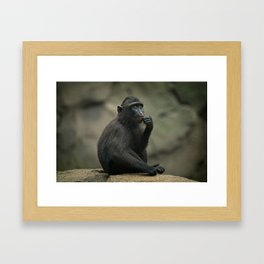 Celebes Crested Macaque Youngster Framed Art Print