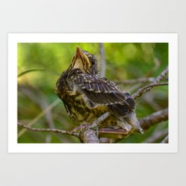 Young bird thrush perched on a branch Art Print