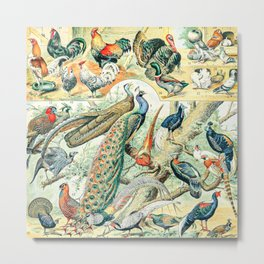 Farm Birds // Oiseaux III by Adolphe Millot XL 19th Century Science Textbook Diagram Artwork Metal Print
