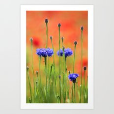 Sapphires and Rubies Art Print