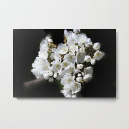 blossoms on black background -04- Metal Print