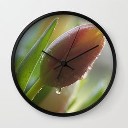 Tulips bud after a spring rain Wall Clock
