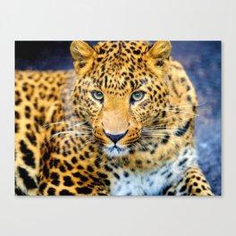 The Cheetah Canvas Print