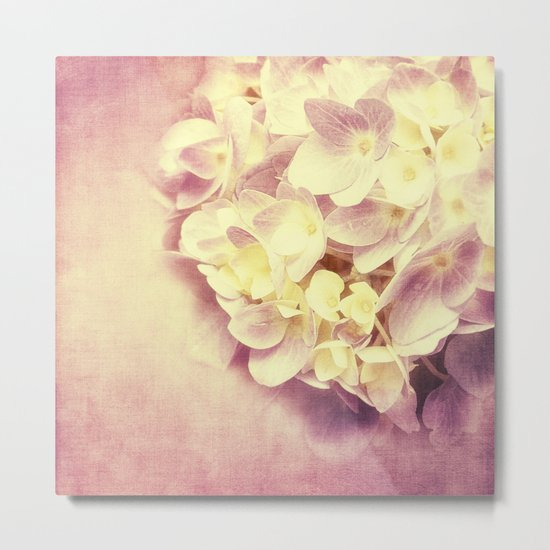 HYDRANGEA IN VANILLA AND PINK Metal Print