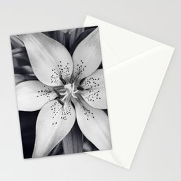 Black and White Lily Flower Photography, Grey Floral Art, Lillies Photo, Grey Lilly Nature Print Stationery Cards