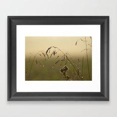 Morning Dew Bending Delicate Grass Framed Art Print