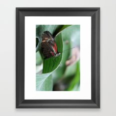 Butterfly Perching Framed Art Print