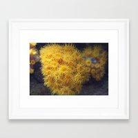coral Framed Art Prints featuring Coral by Deborah Janke