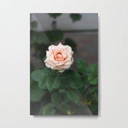 Flower Photography by Raspopova Marina Metal Print