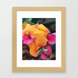 Flame Pea Framed Art Print