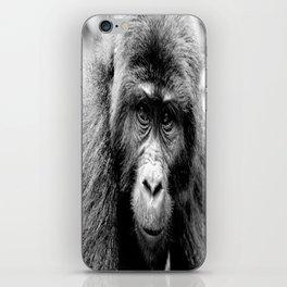 Silver back Gorilla iPhone Skin
