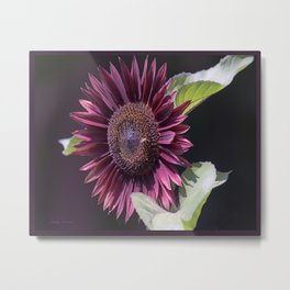 Red Natural Sunflower Metal Print
