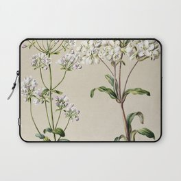Antique plant Gentiana Pleurogynoides - Chatham Islands and Southland drawn by Sarah Featon (1848-19 Laptop Sleeve