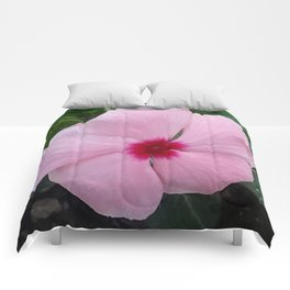 Simplicity in a Pink Flower Comforters